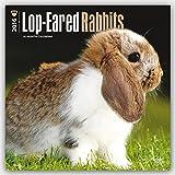 Lop-eared Rabbits 2016 - Kaninchen mit Hängeohren - Widderkaninchen - 18-Monatskalender: Original BrownTrout-Kalender [Mehrsprachig] [Kalender] (Wall-Kalender)