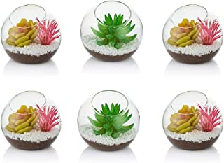 Terrario De Planta De Aire De Vidrio, Mini Terrario De 10 Cm, 6 Piezas De Envases De Terrario De Vidrio De Mesa, Florero De Exhibición De Mesa, Decoración Interior Para Suculentas, Cactus, Velas