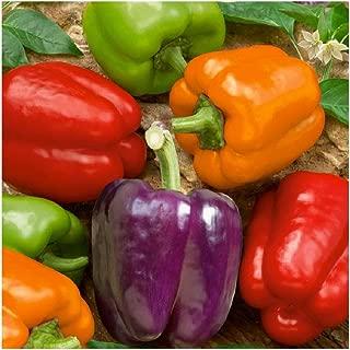 David's Garden Seeds Pepper Bell Rainbow Blend SL1325 (Multi) 50 Non-GMO, Heirloom Seeds
