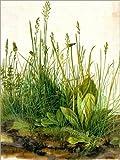 Poster 50 x 70 cm: Das große Rasenstück von Albrecht