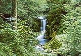Fototapete - WASSERFALL - (279i) Größe 366x254 cm 8-teilig - Wald Sonne Bäume Bach Landschaft...