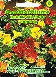 Gauklerblume 'Twinkle-Formula-Mischung' , einjährig ,Farbenfroh, kompakt, Hybride Gruppenpflanze, (Mimulus Hybride)