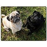 TSlook 50x80 Blankets 2 Pug Dog (Color 5)