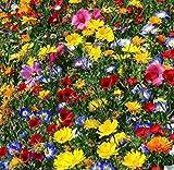 Adolenb Seeds House- Mélange de fleurs vivaces 'Mix' Papillons et abeilles '- Pré de fleurs, Graines de fleurs sauvages rares Mix Hardy Wildflowers & Herbs