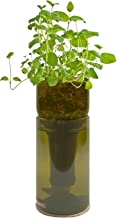 Potting Shed Creations Grow Bottle - Mint