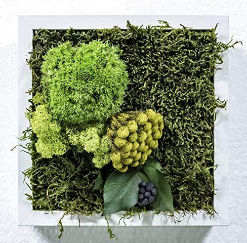Mi Jardín Vertical Musgo Preservado Cuadro Vegetal 23 x 23 cm (Soho)