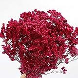 Tivivose Siempreviva Hierba Cristal Artificial Flores secas decoración de la Boda Ramo Deco casero Ventana de exhibición de la Tienda Real de Flores secas Regalos de cumpleaños r