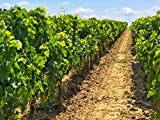 French Regions: Bordeaux and Loire