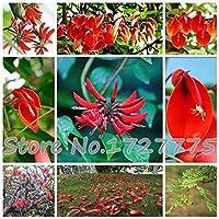 本当の盆栽! 50pcs / lotはアメリカデイゴ、ブラジルの低木の美しい花の盆栽家の庭無料shippi:レッド