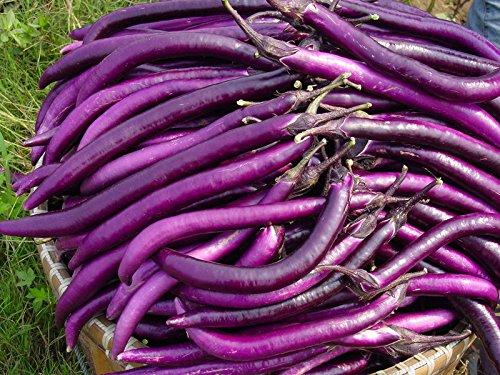 200pc semi viola melanzana. Naturale sementi di ortaggi verdi. il ricco giardino piantato Semplice