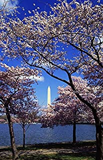 Home Comforts Peel-n-Stick Poster of Washington Dc Japanese Cherry Trees Blooming Blooms Vivid Imagery Poster 24 x 16 Adhesive Sticker Poster Print