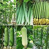 ZLKING 100 Piezas de Mezcla de Semillas de lufa, Cultivos de Escalada Verde, Herencia sin OMG, Fuerte adaptabilidad al frío, Adecuado para jardineros novatos para Cultivar Semillas de lufa