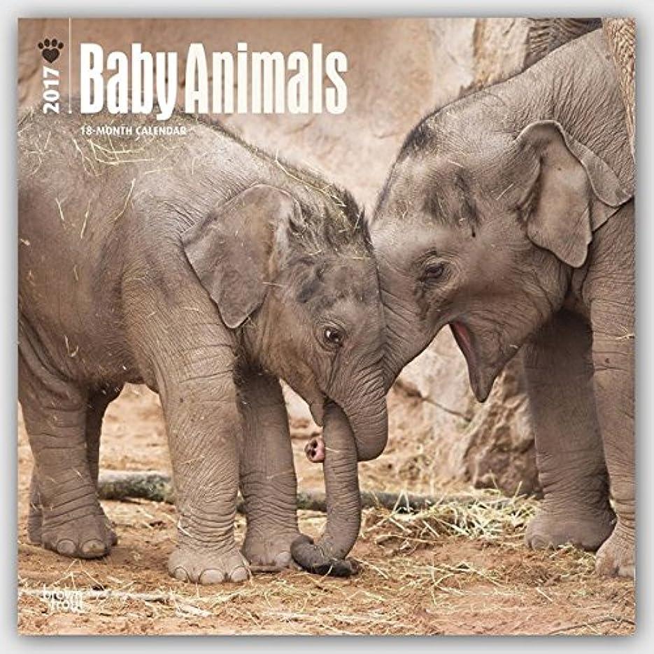 ピグマリオン麦芽投げるBaby Animals 2017 Calendar (Square Wall)