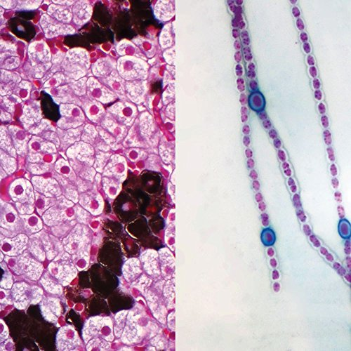 Prokaryotic and Eukaryotic Cells Individual Microscope Slide