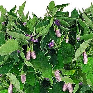 Fairy Tale Eggplant Seed Pod Kit for AeroGarden (Tall Garden Kit)