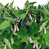 Fairy Tale Eggplant...image