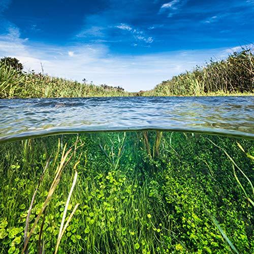 Semillas de hierba de agua, 100 piezas / bolsa Semilla de hierba de agua Semillas de plantas de acuario en vivo de hierba verde ornamental fresca - Reembolso del 100%