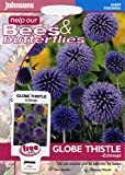 johnsons seeds - Pictorial Pack - Fiore - Cardo a Globo - Echinops - 50 Semi