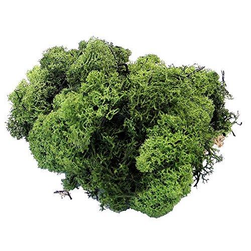 Angraves Large 460g Pack of Dark Green Dried Reindeer Moss
