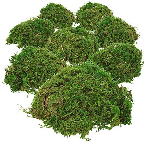 com-four® 8X grünes DIY Bastel-Moos - echtes Deko-Moos zum Basteln und Dekorieren - ca. 25 g je Beutel (Set2 - Dekomoos - 8X)