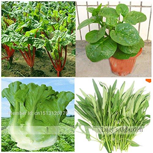 Sales Promotion. Mélange Laitue/Malabar d'épinards/rouge Tige d'épinards/eau d'épinards Graines de légumes 380 pcs