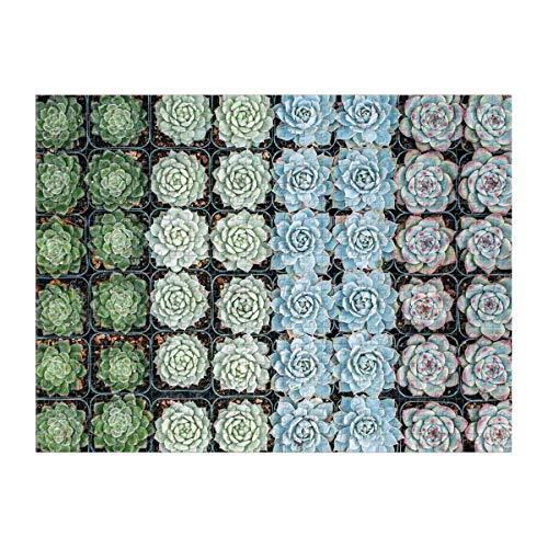 Galison Succulent Garden 500 Piece Double Sided Jigsaw...