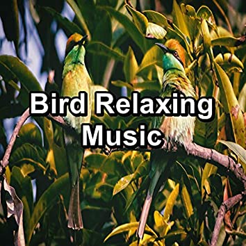 Bird Relaxing Music