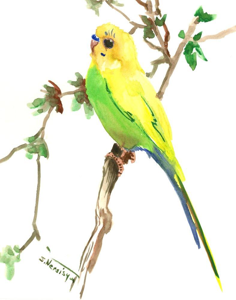 Complete Free Shipping Budgie Parkattet artwork Bird Time sale