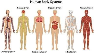 Best emotional anatomy chart Reviews