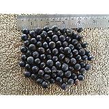 発芽種子:20シードサピンダスmukorossi、Soapnut、ソープナッツ、ムクロジ、ソープベリー、Washnut