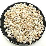AITELEI - Perlas naturales de ostras de agua dulce, 100 g de cuentas sueltas para rellenar jarrones o para fiestas, bodas, decoración, manualidades, joyería, sin agujeros, 7-10 mm