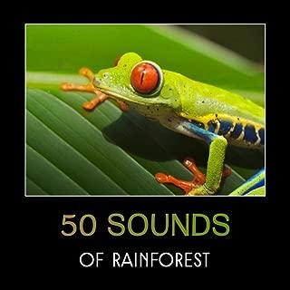 tree frog sounds ny