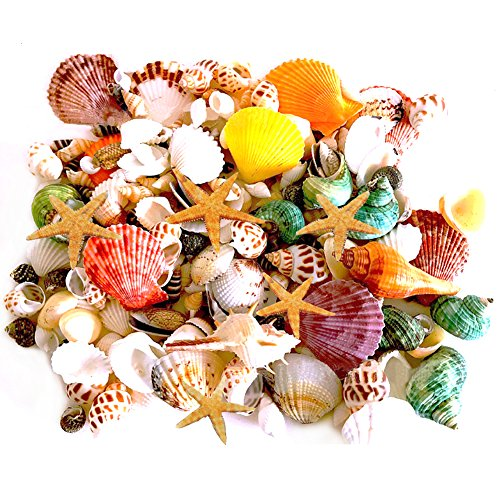 135 PCS Mini Sea Shells Mixed Beach Seashells Starfish, Colorful Natural Seashells Perfect Accents for Candle Making, Home Decoration, Beach Theme Party Wedding Decor, Fish Tank and Vase Filler