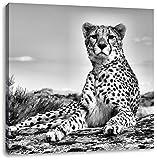 Pixxprint Gepard in Savanne als Leinwandbild Quadratisch |