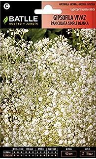 comprar comparacion Semillas de Flores - Gipsofila vivaz Paniculata - Batlle