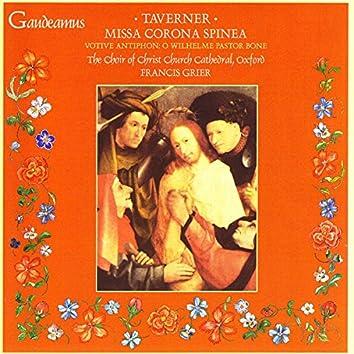Taverner: Missa Corona Spinea; Votive Antiphon: O Wilhelme Pastor Bone