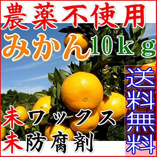 【訳あり】無農薬 愛媛みかん 約10kg みかん サイズ混合 産地直送 ore