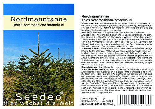 Seedeo® Nordmanntanne (Abies nordmanniana ambrolauri) 20 Samen