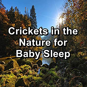 Crickets in the Nature for Baby Sleep