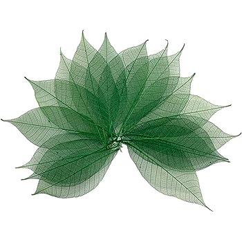 50 Mixed Natural SKELETON LEAVES SCRAPBOOK Craft Embellishment Bookmark DIY