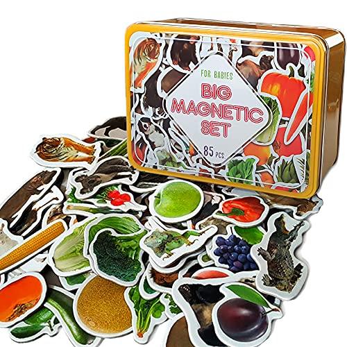 MAGDUM 85 Fotos Set Animales&Frutas&Verduras en Caja de Lata de Regalo-imanes de bebé Realistas-85 Grandes Juguetes de imán para 3 años-Juegos Educativo Aprender magnético para niños-Teatro Magnético ⭐
