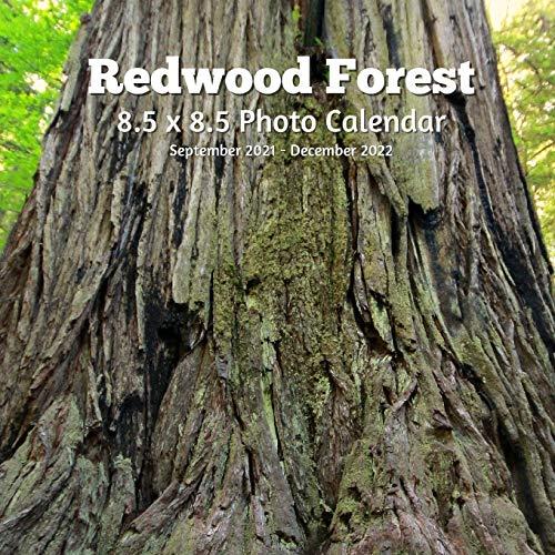 Redwoods Trees 8.5 X 8.5 Calendar September 2021 -December 2022: Monthly Calendar with U.S./UK/ Canadian/Christian/Jewish/Muslim Holidays-Travel Holiday Professional Photography