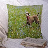 Decorative Pillowcase Red Attribute Beautiful Hungarian Breed Brown Vizsla Dog Animals Wildlife Across Parks Canine Day Throw Pillow Cover Soft Square Cushion Case for Bed Couch Car 18x18 Inch