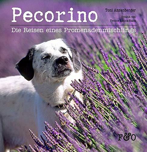 Pecorino: Die Reisen eines Promenadenmischlings