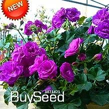 Hot Sale!20 Seed/Pack Purple Univalve Geranium Seeds Perennial Flower Seeds Pelargonium Peltatum Seeds for Rooms,#74EKCI