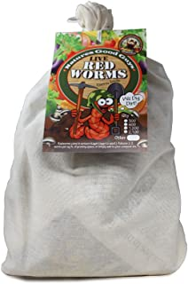 Composting worms - 1,200 red wigglers