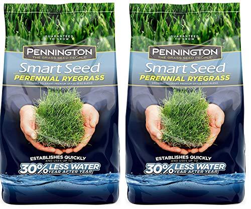 Pennington 100526658 Smart Perrenial Rye Grass Seed, 3 LBS (Тwо Расk)