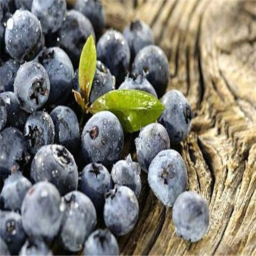 Grandes ventes !!! 200 graines de fruits géant de myrtille américain de germination de 95% +