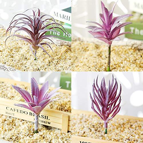 Cayway Plantas