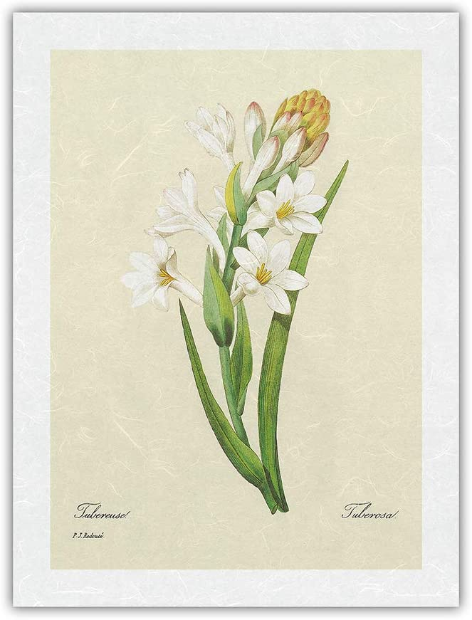 discount Tuberose OFFicial site Tuberosa - from The Selection Beaut Book: Most of